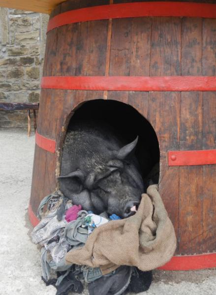 Trüffelschwein.png